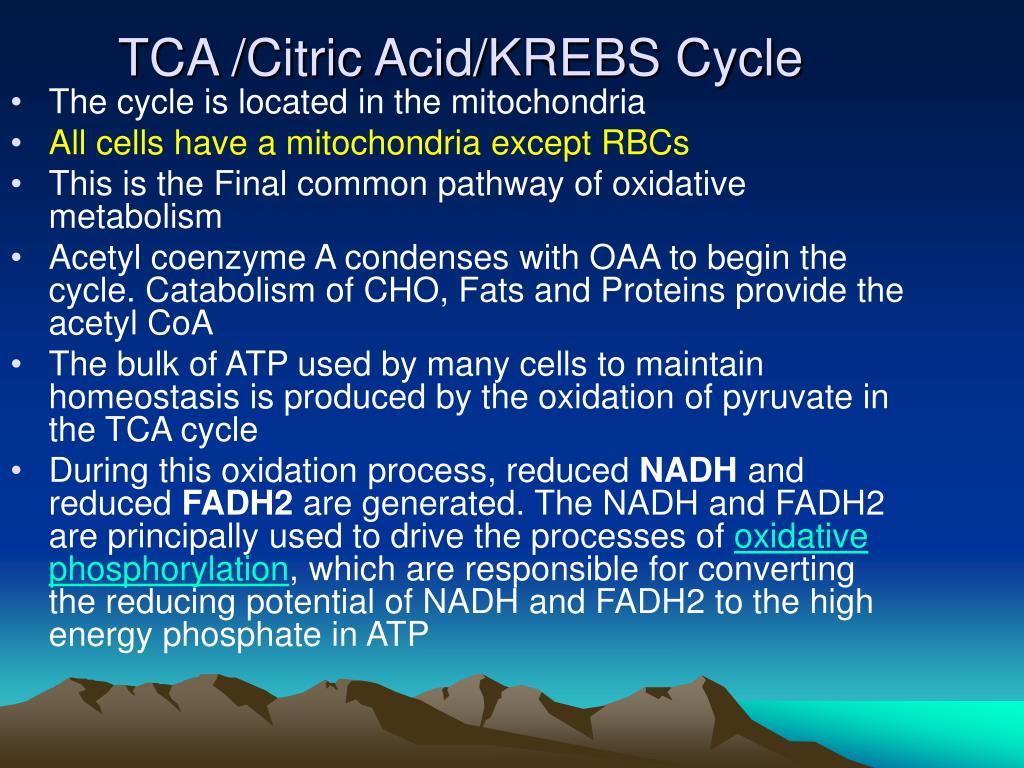 TCA /Citric Acid/KREBS Cycle