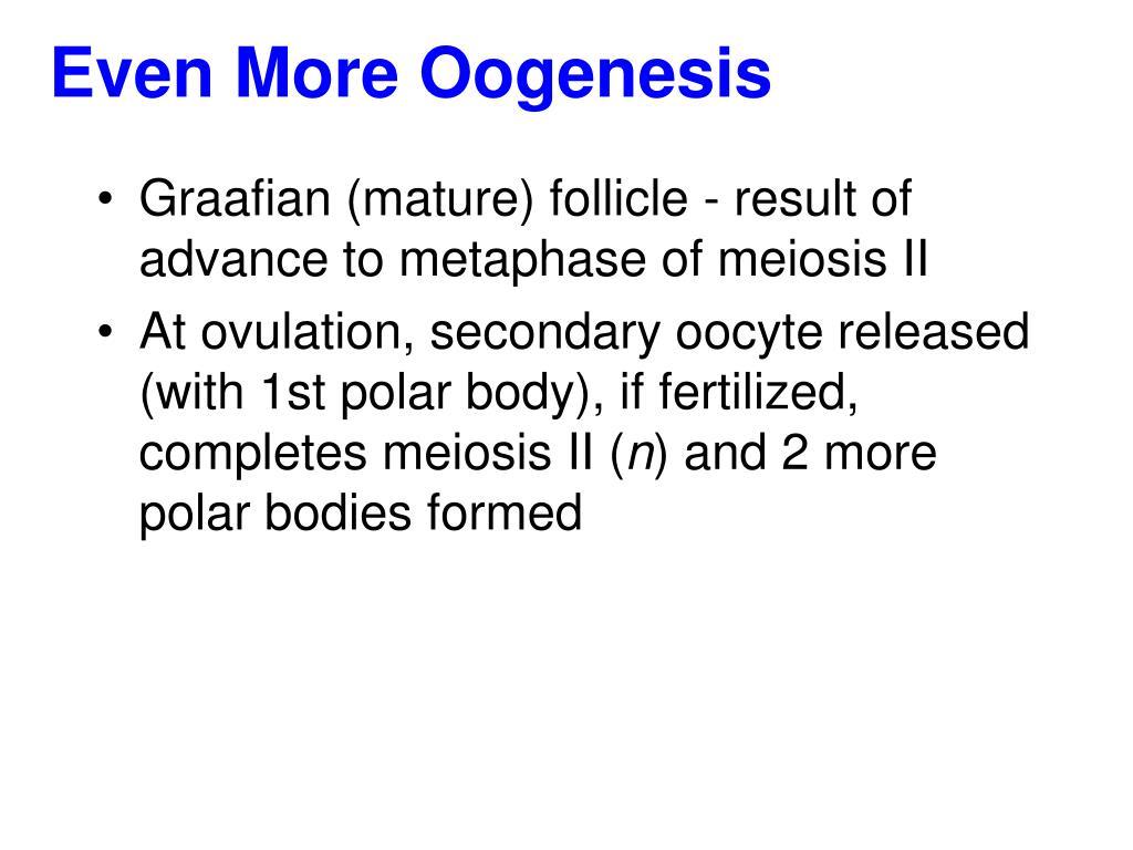 Even More Oogenesis