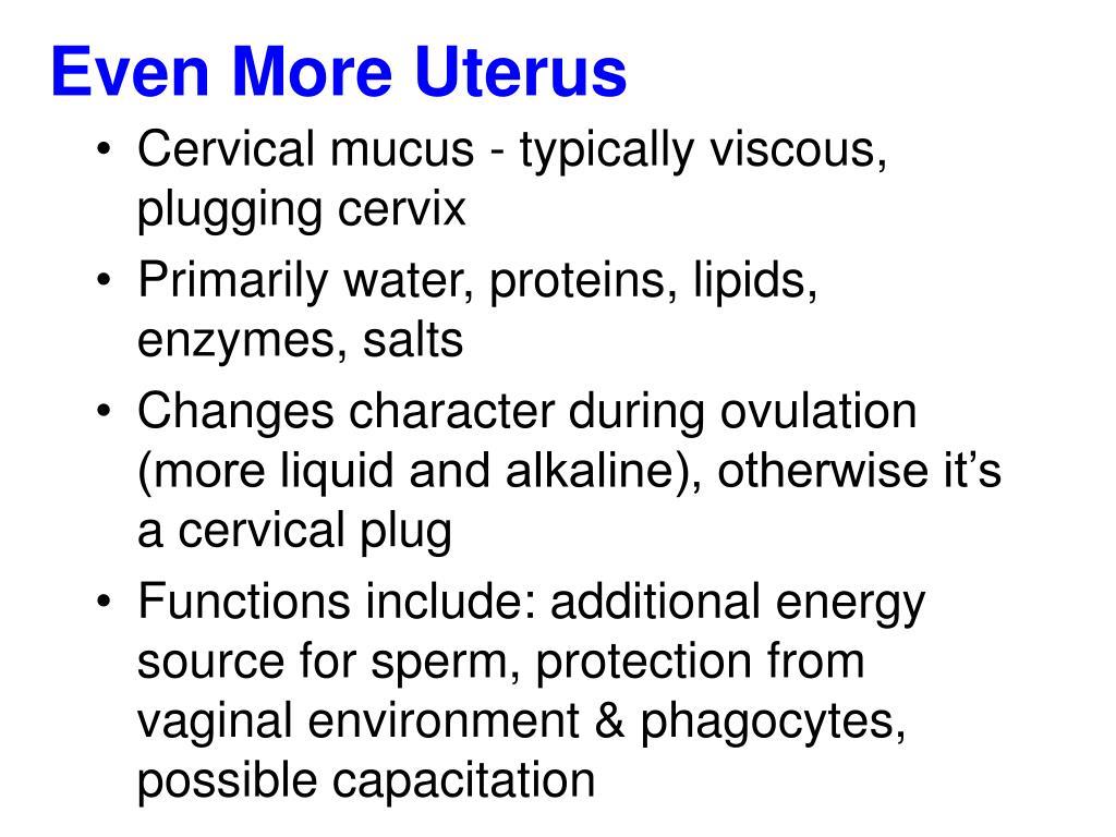 Even More Uterus