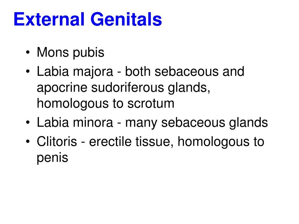 External Genitals