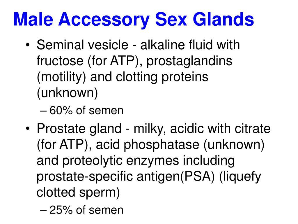 Male Accessory Sex Glands