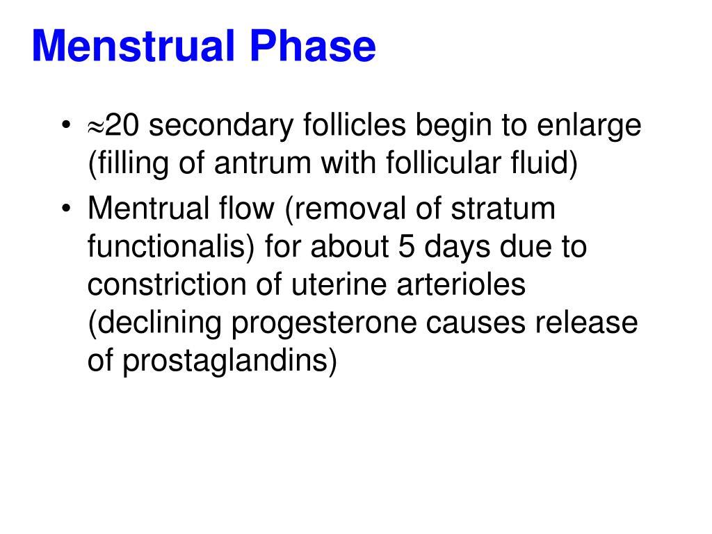 Menstrual Phase