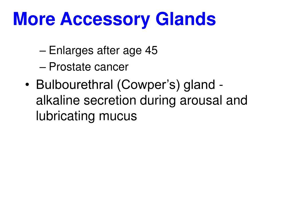 More Accessory Glands