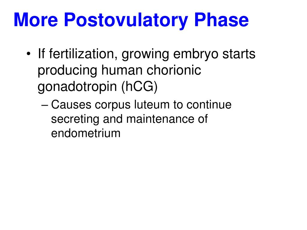 More Postovulatory Phase
