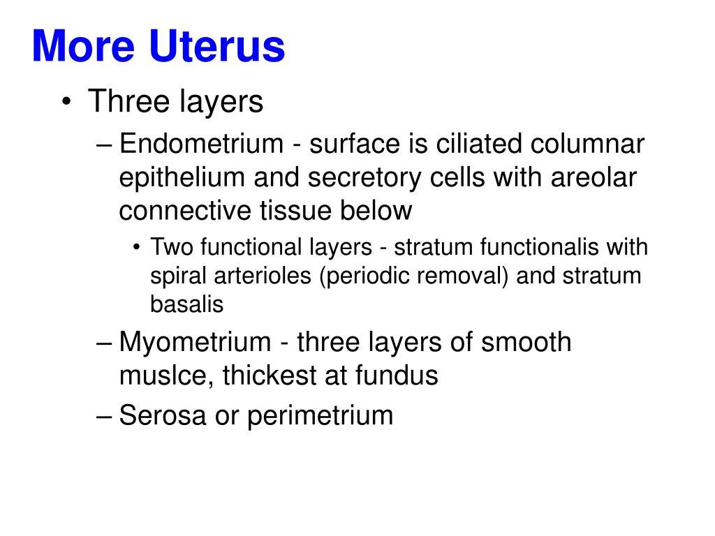 More Uterus
