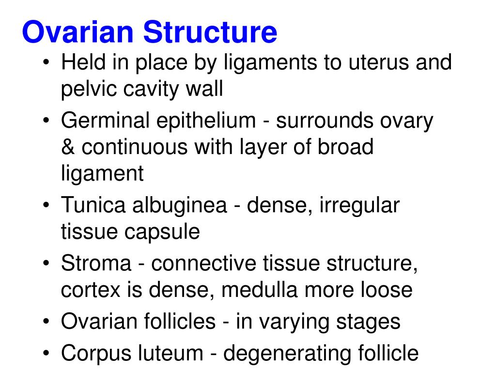 Ovarian Structure