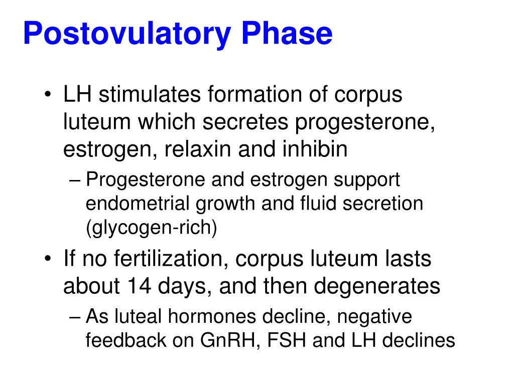 Postovulatory Phase