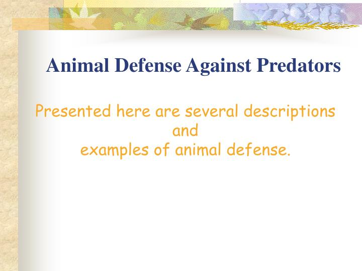 Animal defense against predators3