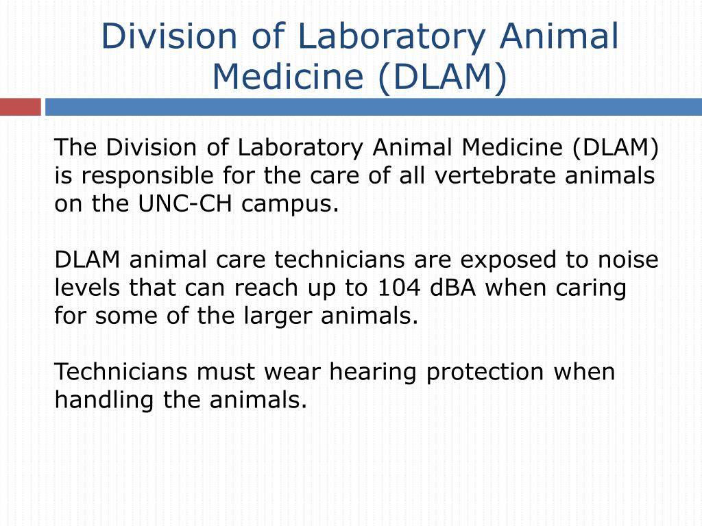 Division of Laboratory Animal Medicine (DLAM)
