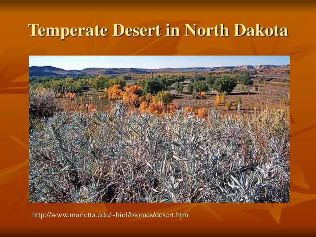Temperate Desert in North Dakota