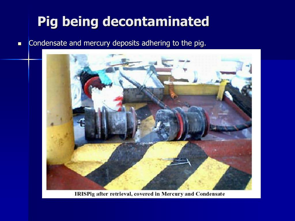 Pig being decontaminated