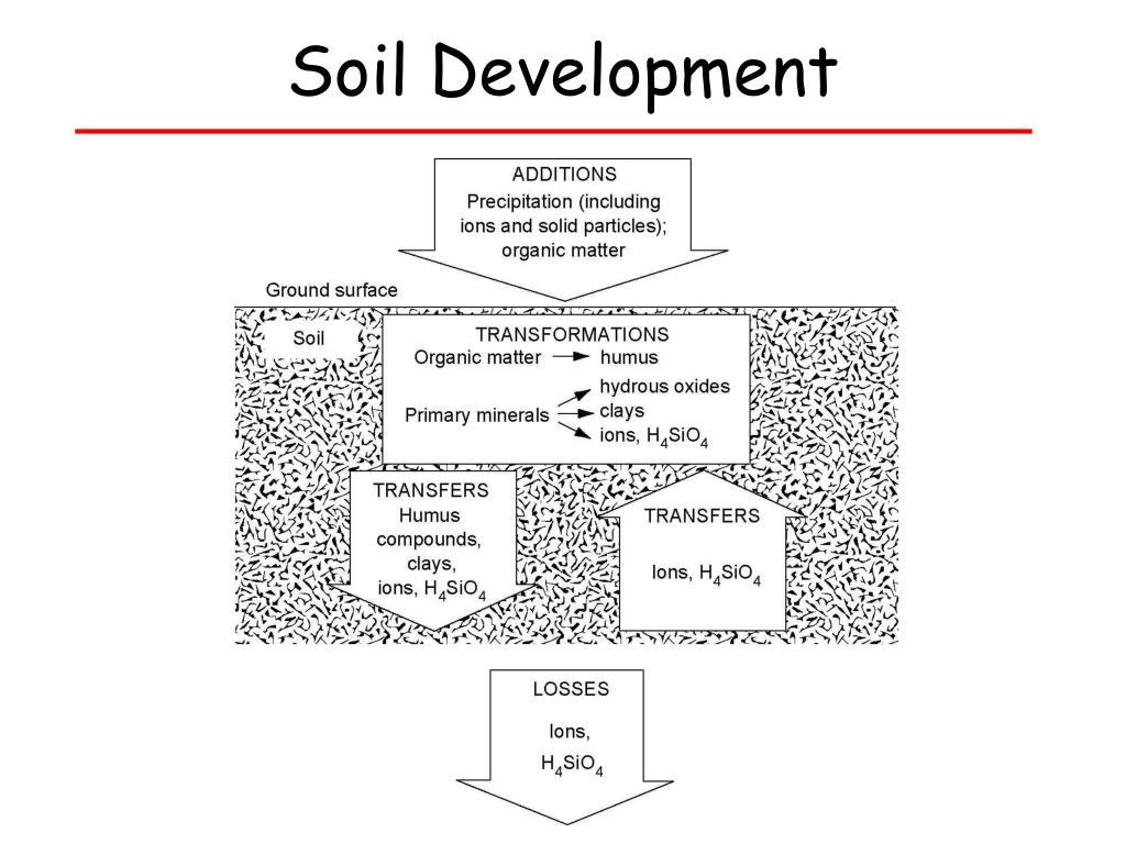 Soil Development