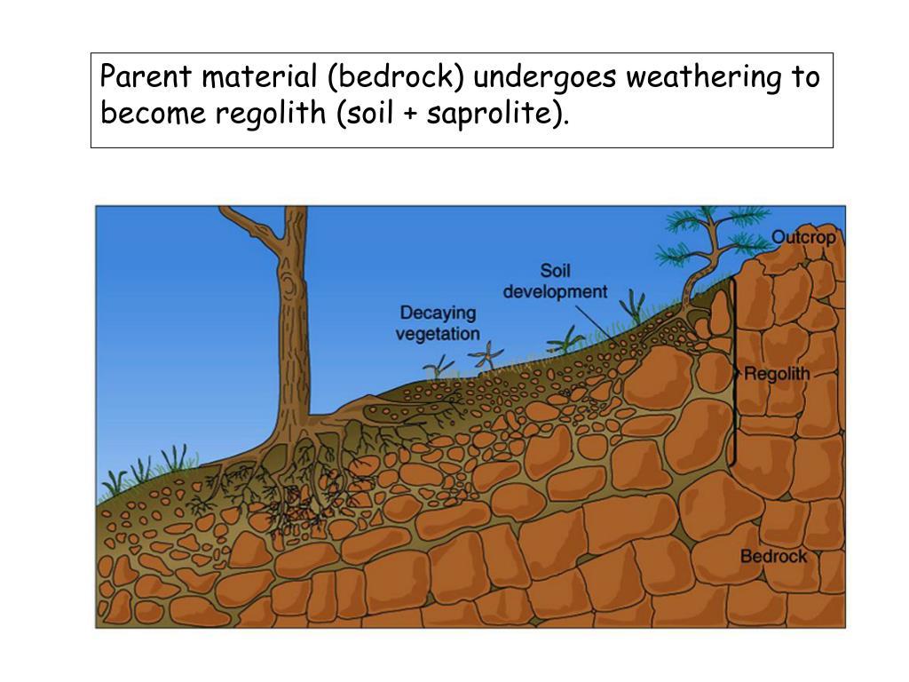Parent material (bedrock) undergoes weathering to become regolith (soil + saprolite).