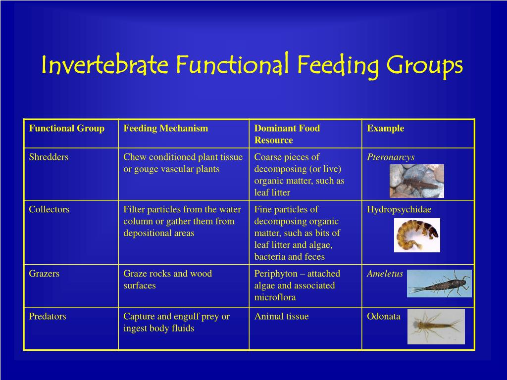 Invertebrate Functional Feeding Groups