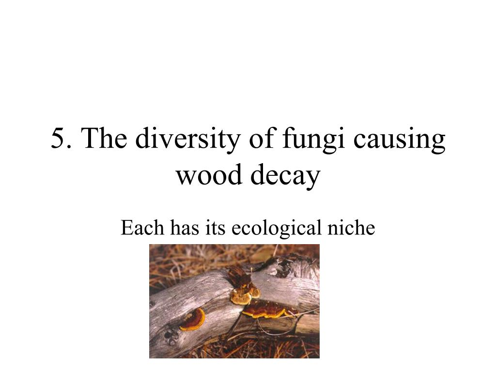 5. The diversity of fungi causing wood decay