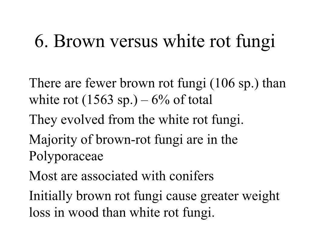 6. Brown versus white rot fungi