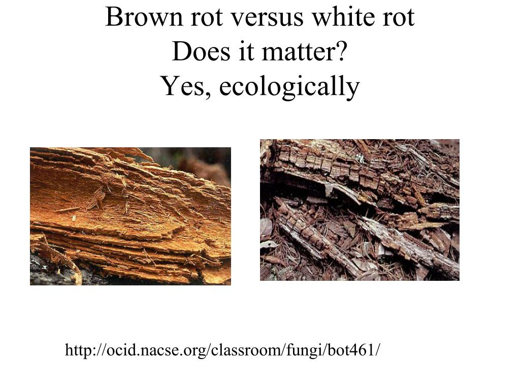 Brown rot versus white rot