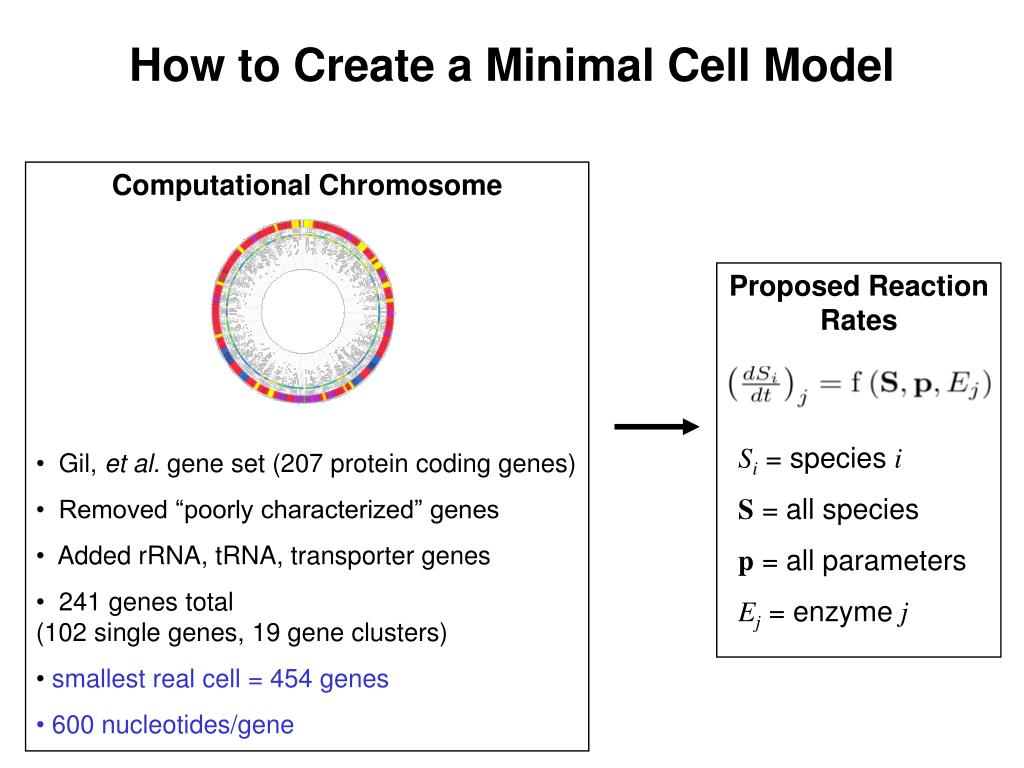 How to Create a Minimal Cell Model