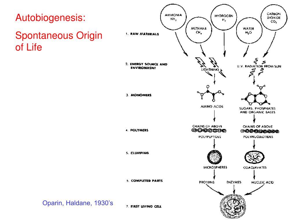 Autobiogenesis: