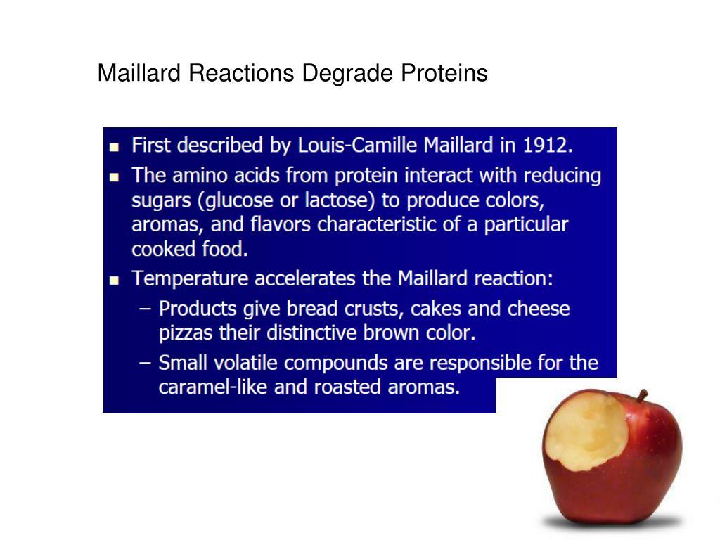 Maillard Reactions Degrade Proteins