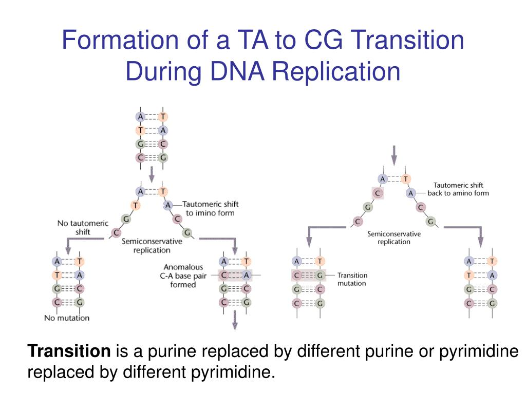 Formation of a TA to CG Transition