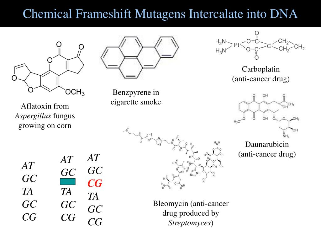 Chemical Frameshift Mutagens Intercalate into DNA