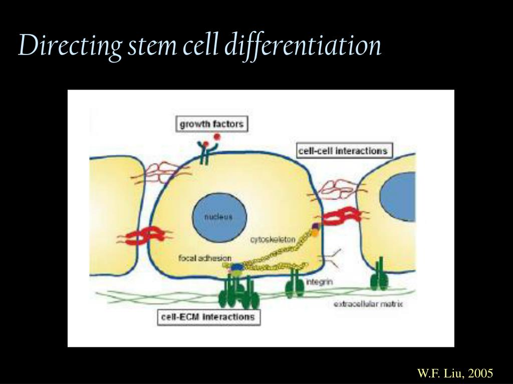Directing stem cell differentiation