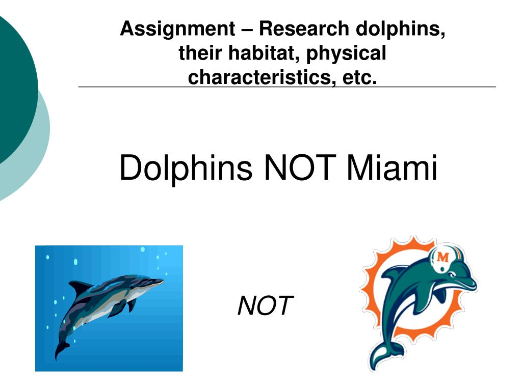Assignment – Research dolphins, their habitat, physical characteristics, etc.