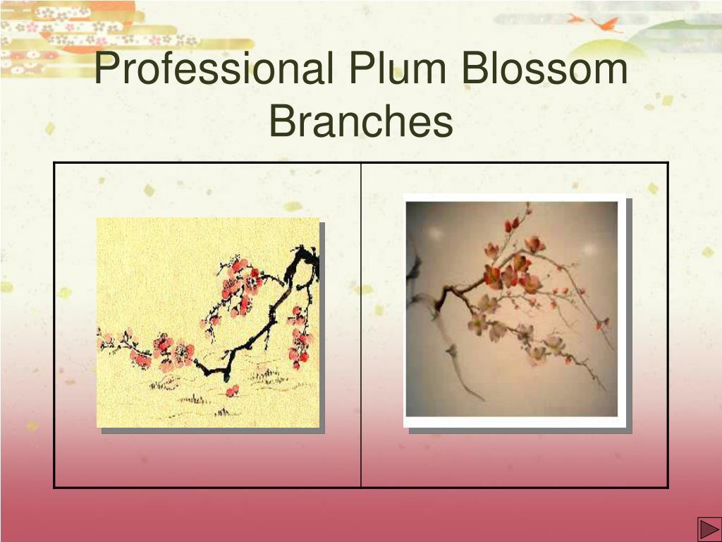 Professional Plum Blossom Branches