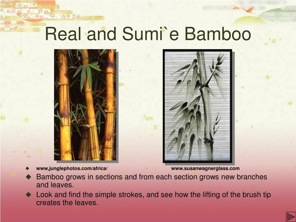 Real and Sumi`e Bamboo