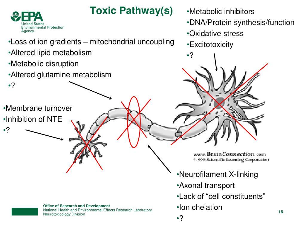Metabolic inhibitors