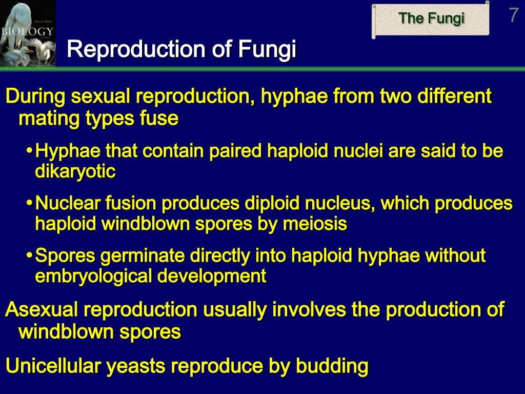 Reproduction of Fungi