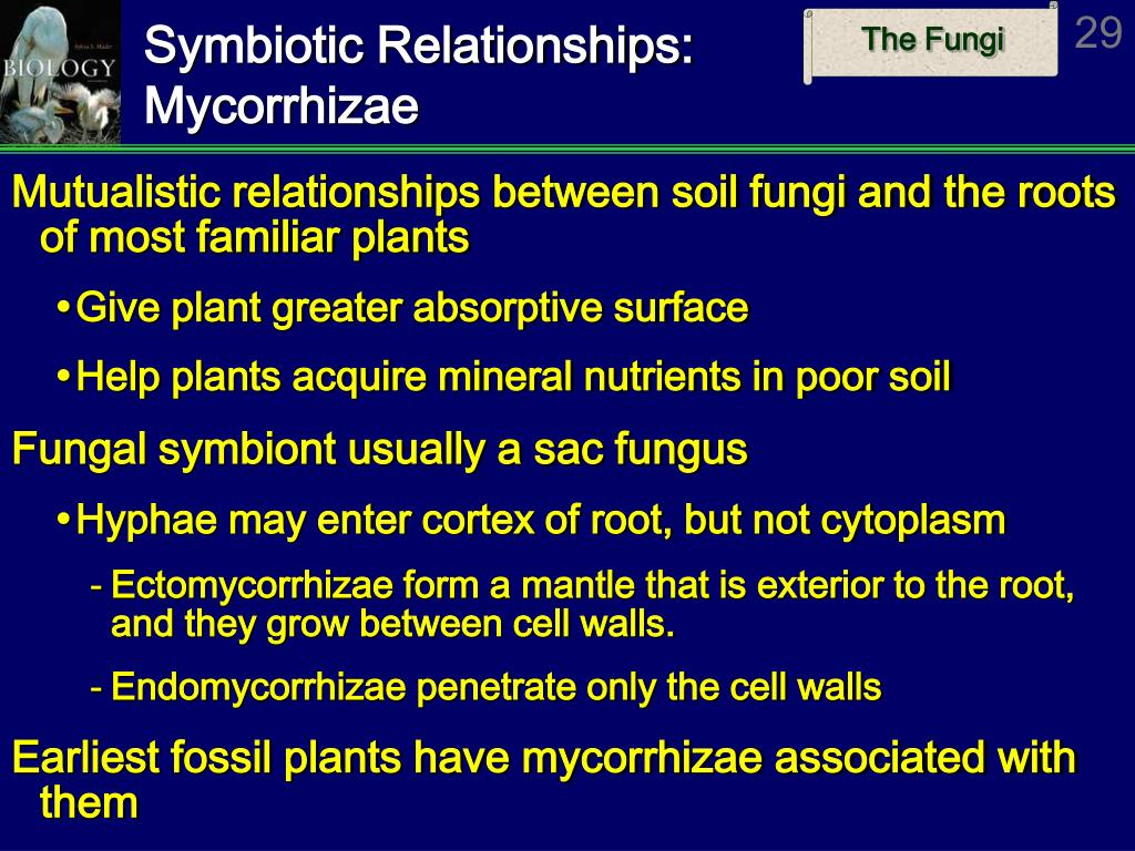 Symbiotic Relationships: