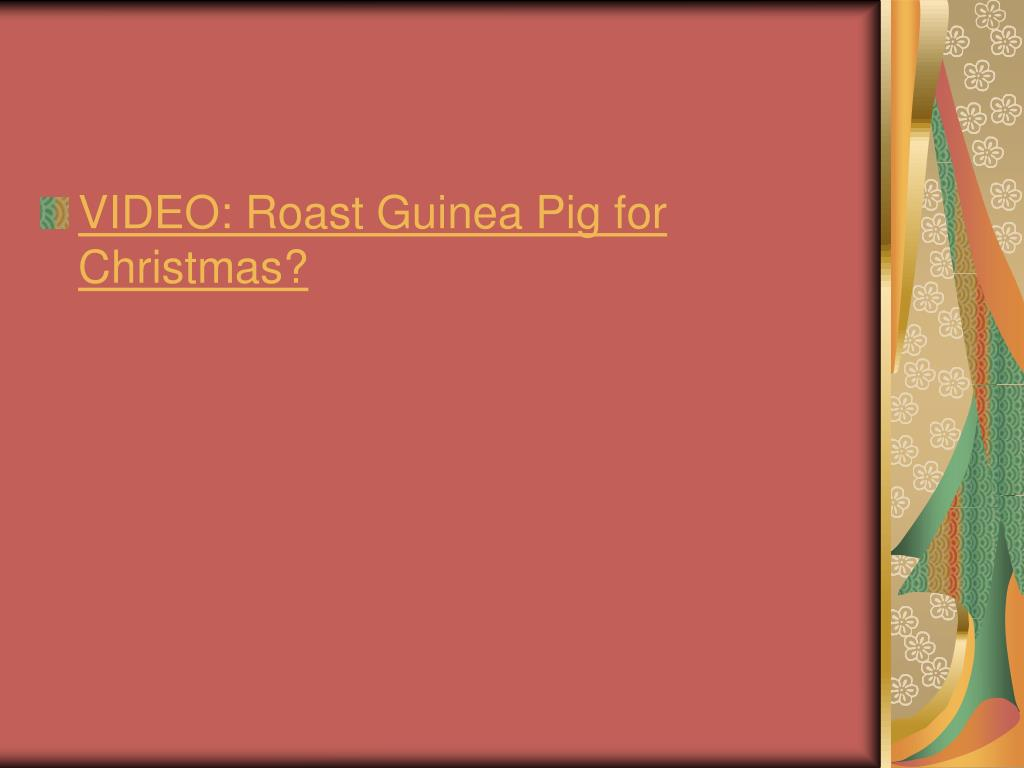 VIDEO: Roast Guinea Pig for Christmas?