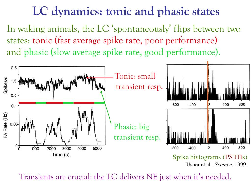 LC dynamics: tonic and phasic states