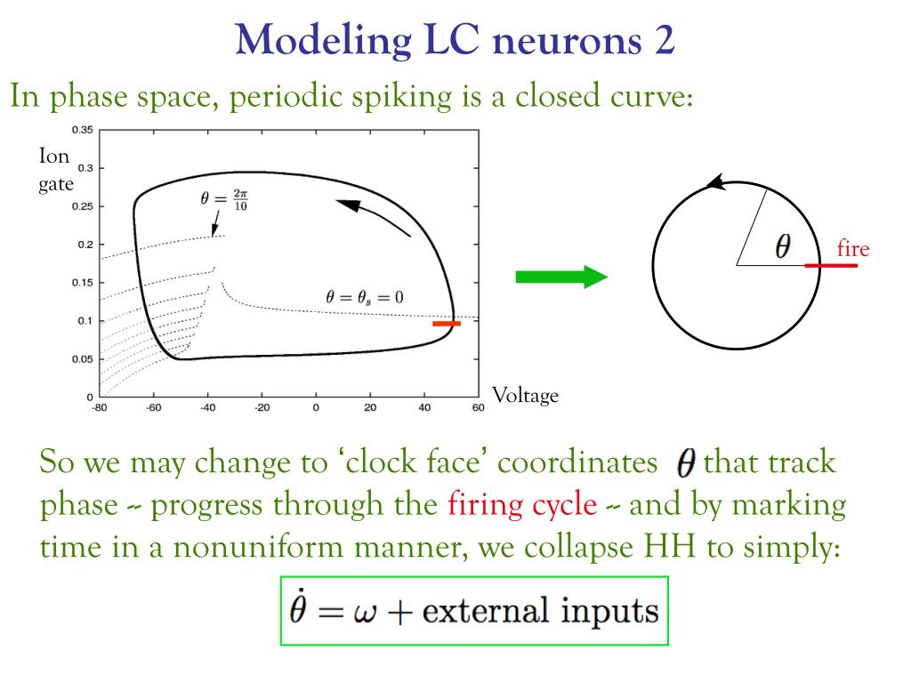 Modeling LC neurons 2