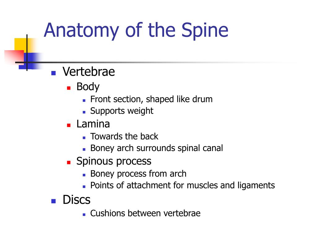Anatomy of the Spine