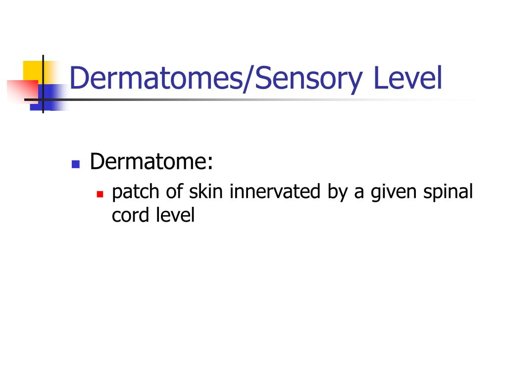 Dermatomes/Sensory Level