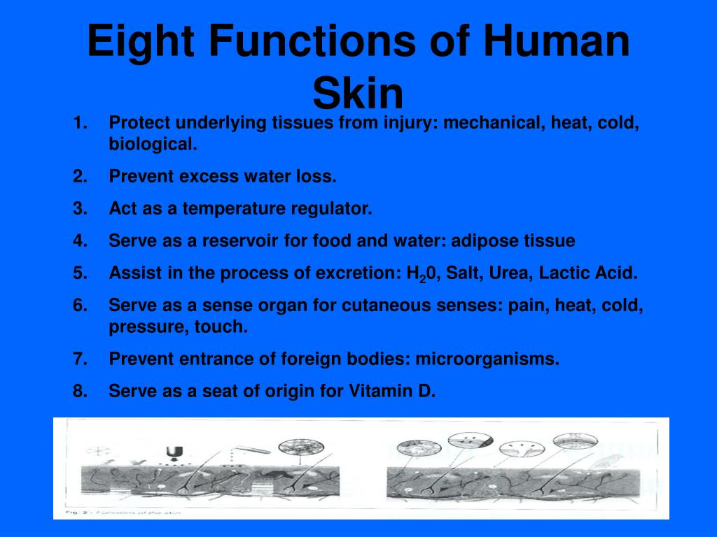 Eight Functions of Human Skin