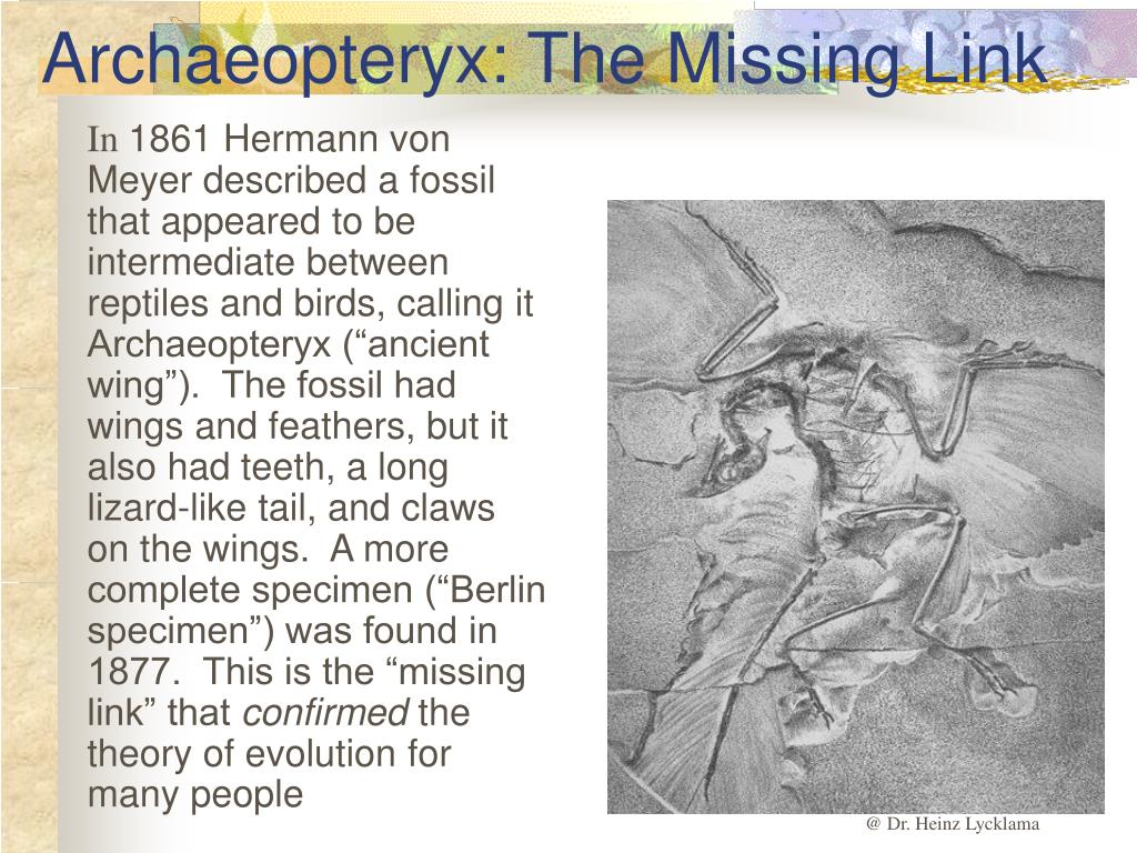 Archaeopteryx: The Missing Link