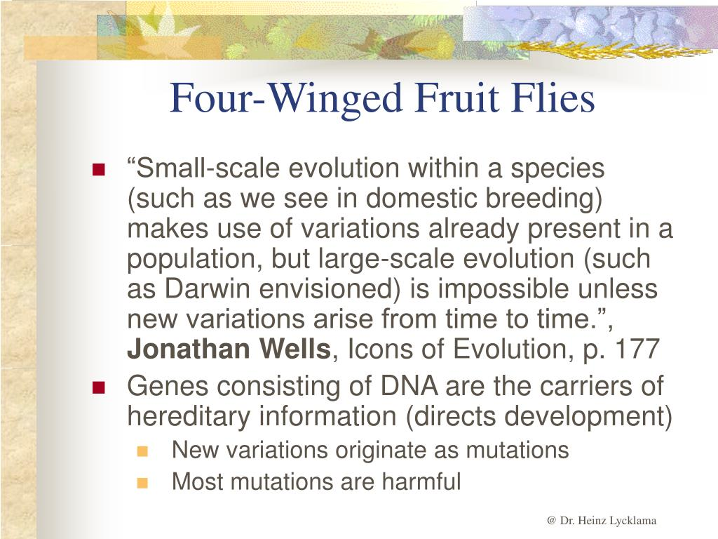 Four-Winged Fruit Flies