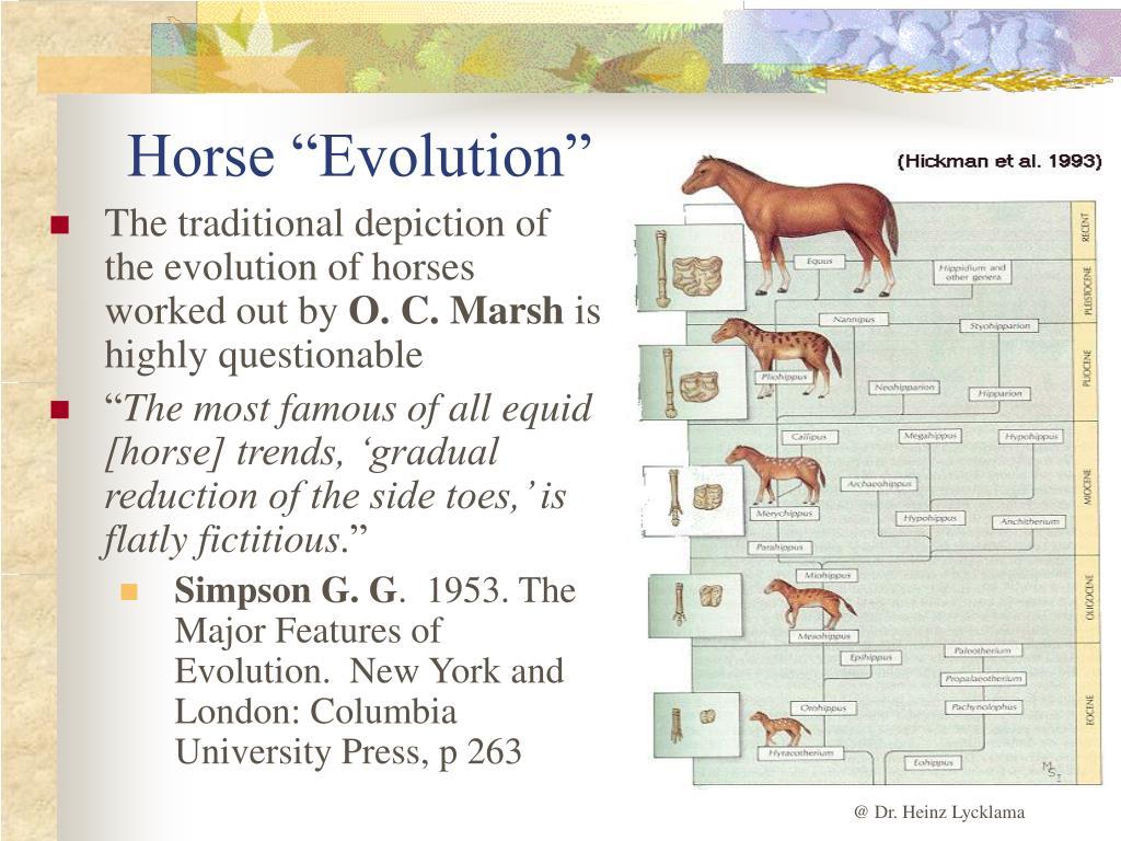 "Horse ""Evolution"""