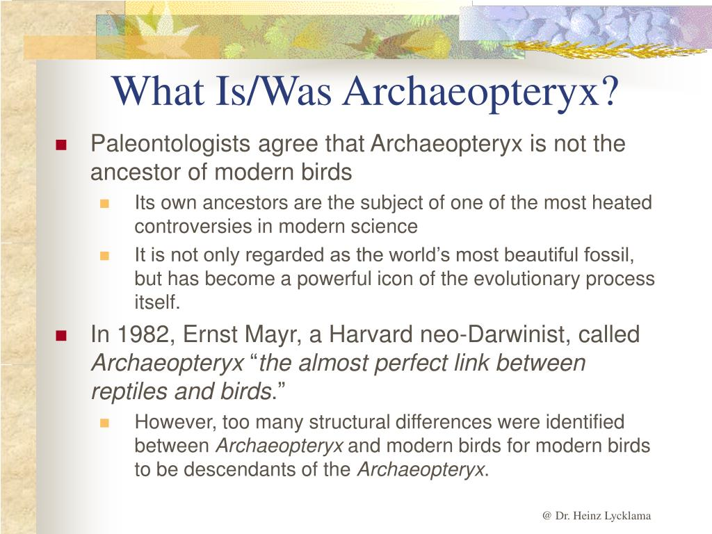 What Is/Was Archaeopteryx?