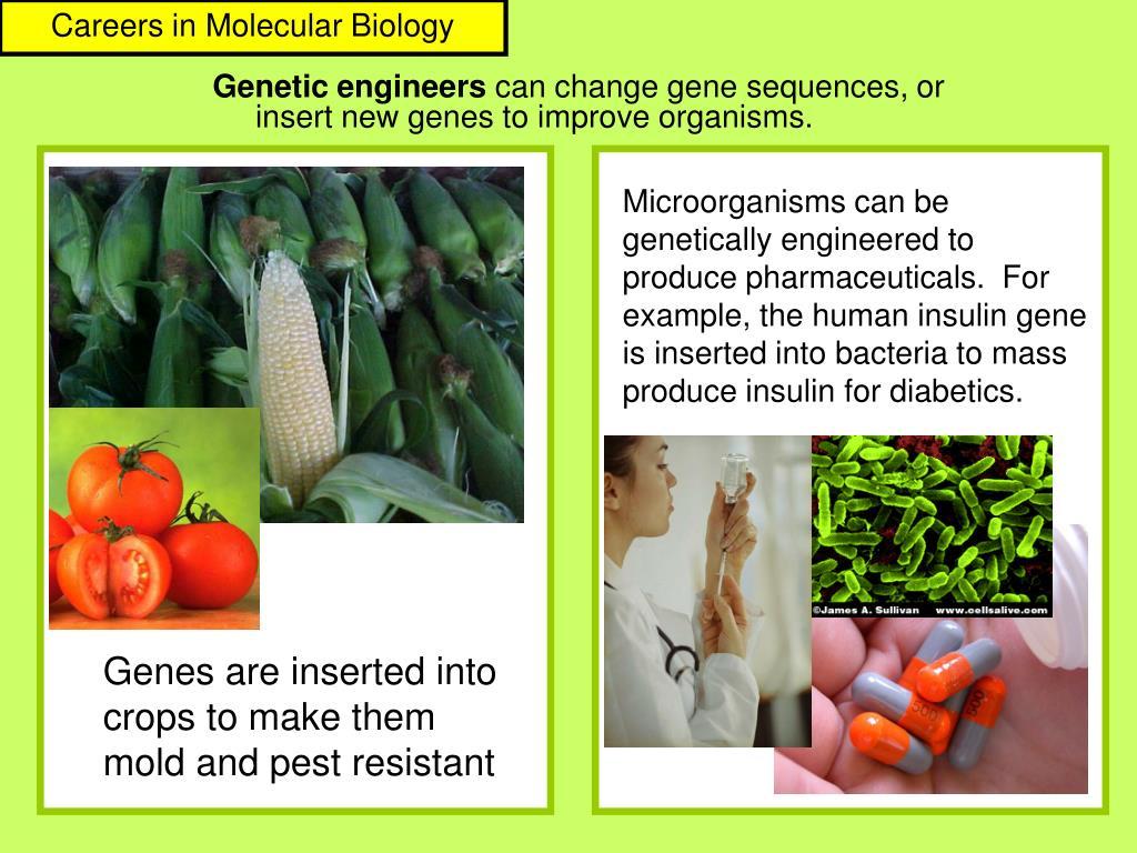 Careers in Molecular Biology