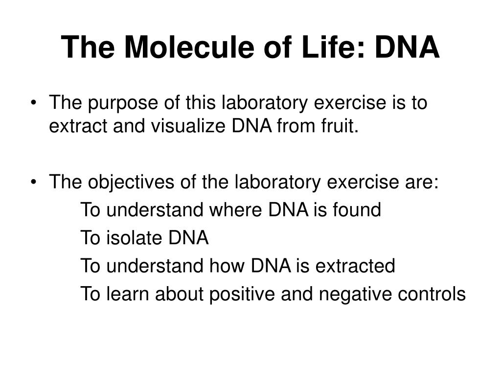 The Molecule of Life: DNA