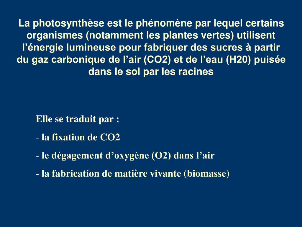 La photosynthèse est le phénomène par lequel certains organismes (notamment les plantes vertes) utilisent l'énergie lumineuse pour fabriquer des sucres à partir du gaz carbonique de l'air (CO2) et de l'eau (H20) puisée dans le sol par les racines
