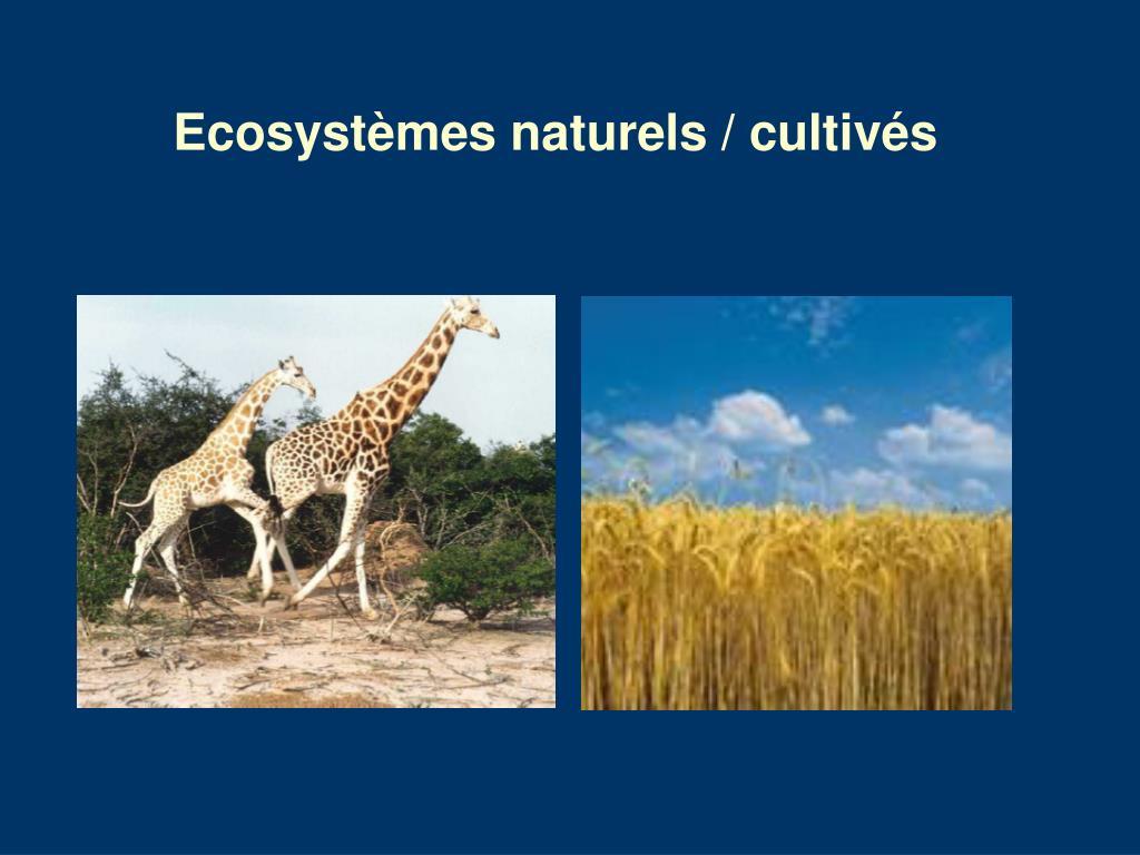 Ecosystèmes naturels / cultivés
