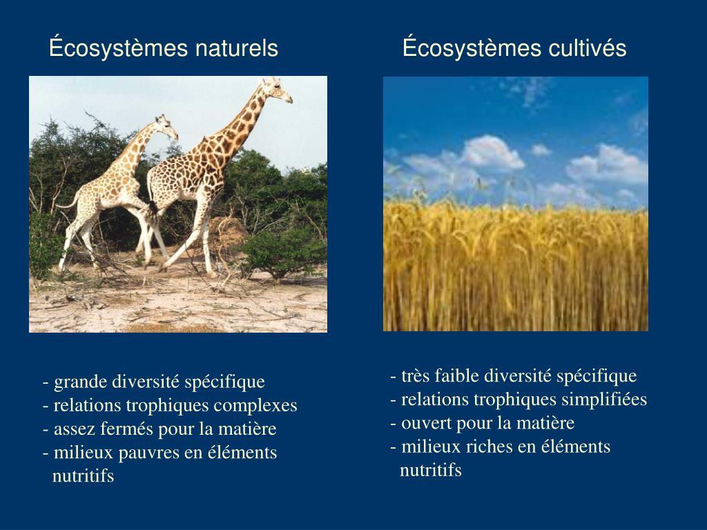 Écosystèmes naturels