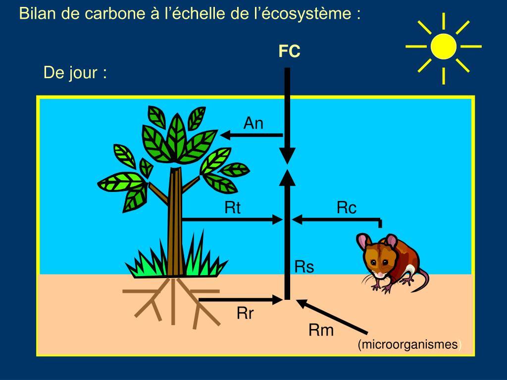 Bilan de carbone à l'échelle de l'écosystème :