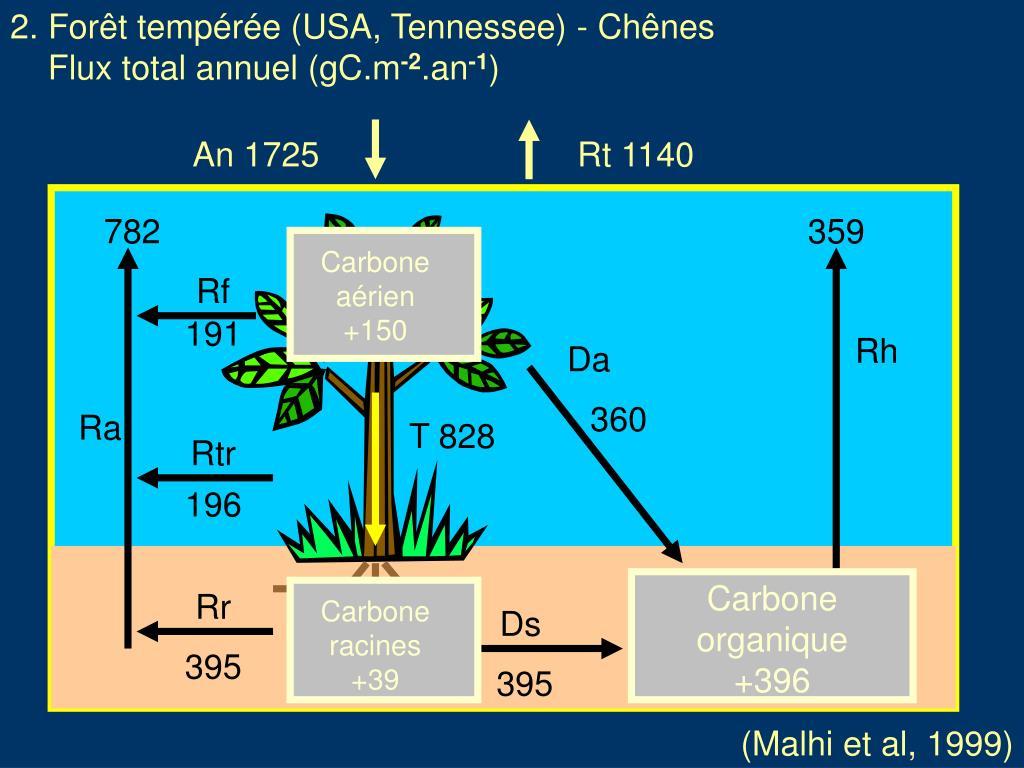 2. Forêt tempérée (USA, Tennessee) - Chênes